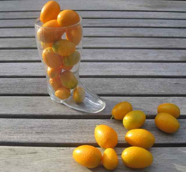 IMG_0030M kumquats